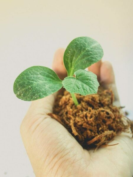 Hand holding a growing seedling