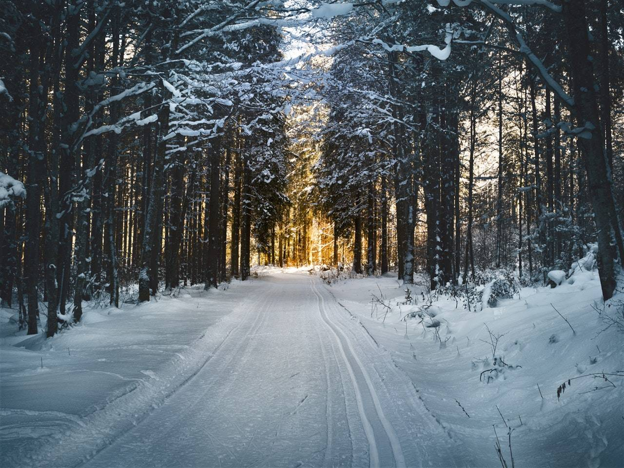 A snowy road surrounded by tall snowy trees