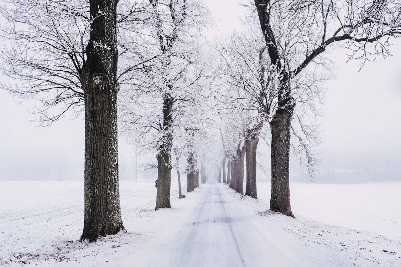 Road covered in snow and surrounded by snow covered fields and tall trees