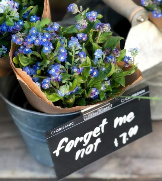 A bouquet of forget me not flowers for sale