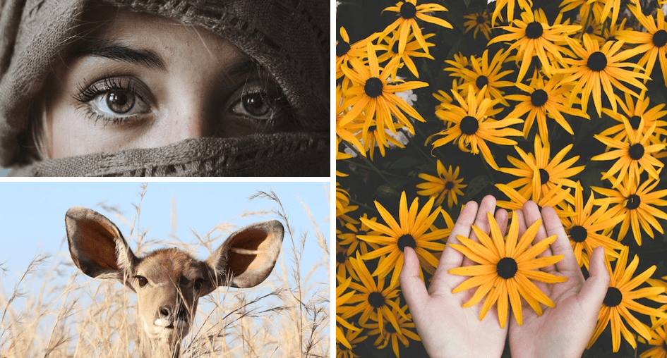 Lady wrapped in garb, a deer hiding in the bush, pair of hands holding a sunflower