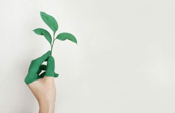 A half-green hand holding a growing green plant